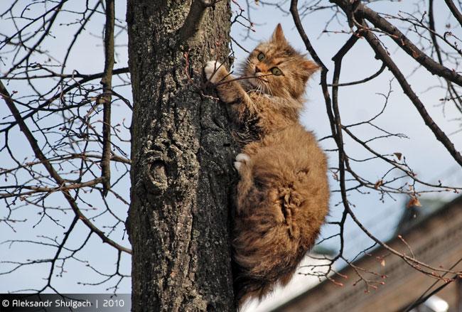 Уличный кот залез на дерево