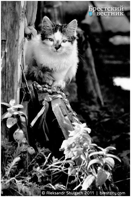 Октябрьский кот