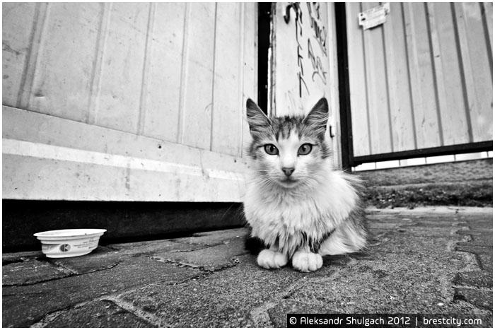 Кот на остановке