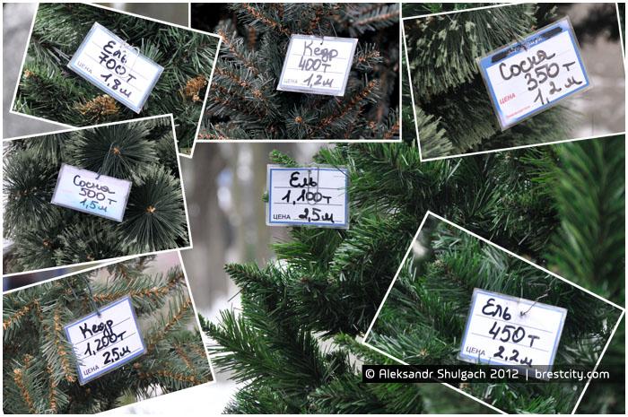 Цены на елки в Бресте