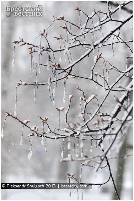 Ледяной дождь. Дерево