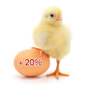 В Беларуси дорожают на 20% яйца