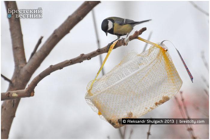 Кормушка для птиц. Синица