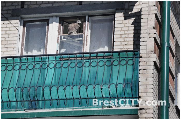 Приватизация государственных квартир в Беларуси