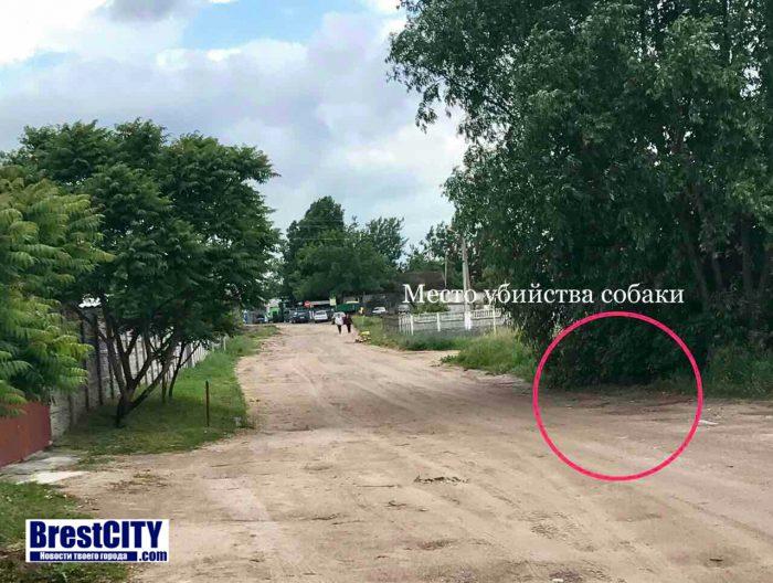 В Брестском районе застрелили собаку на глазах у ребенка. Письмо читателя