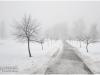 fog_brest_07