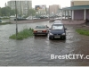 rain_brest06